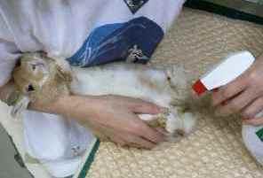 ↓値下げ  うさぎは雑菌に弱いから安心除菌スプレーうさっきんぐ うさぎ飼育必需品
